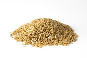 Len złoty nasiona